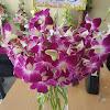 Bunga Meja Anggrek 300917