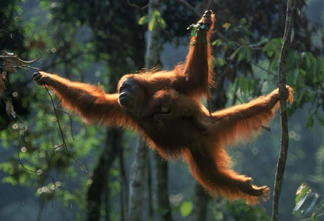 http://www.katasaya.net/2016/05/lima-hewan-terancam-punah-Indonesia.html