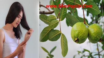 The Benefits Of Guava Leaf Tea | अमरूद के पत्तों की चाय के फायदे