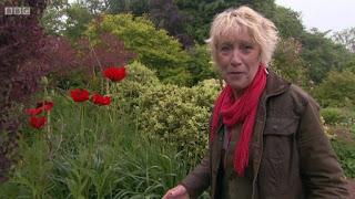 Carol Klein  poppy