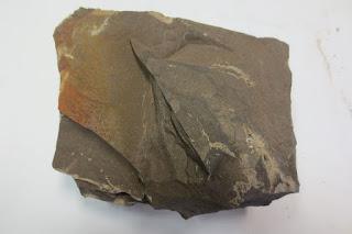 pedra de xisto betuminoso com óleo