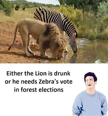 Funny zebra and lion picture