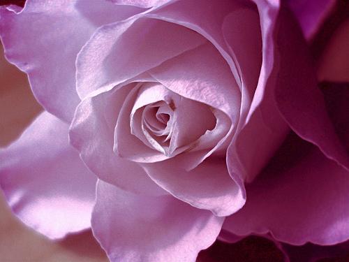 صور زهور جميلة ملونة