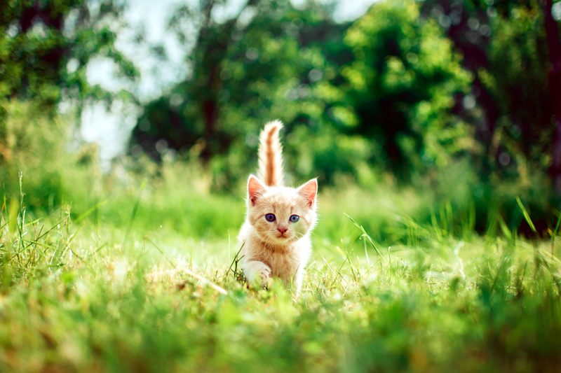 How to prepare for a new kitten or puppy