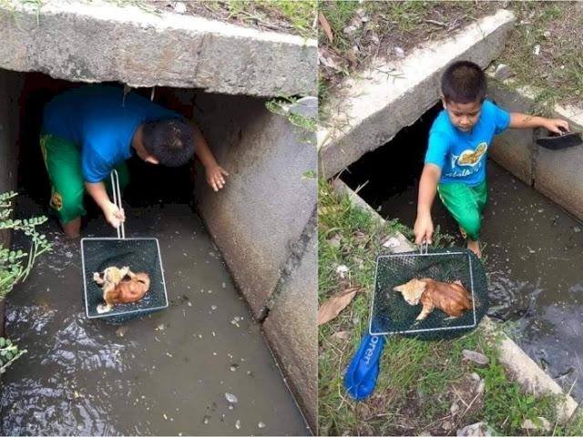 Anak ini Rela Masuk ke dalam Got demi Selamatkan Anak Kucing yang Hanyut