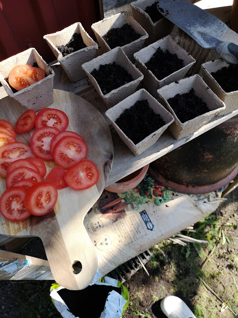 plantera, tomat, toomater, tomat, tomatskiva, tomatskivor, frön, fröna, frö, planta, plantor,