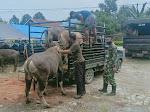 Kepala Staf TNI Angkatan Darat; Sumbang 21 Ekor Sapi Qurban Bagi Pengungsi Luwu Utara