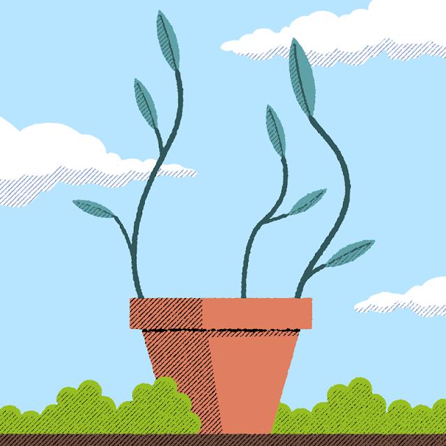 shoo bop illustration drawing marcos moran plant