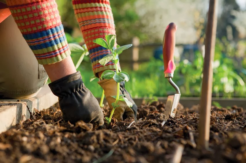 Tips for Gardening in an Arid Climate