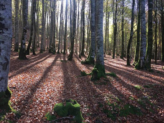 Selva de Irati - AlfonsoyAmigos