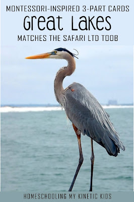 Learn about wetland animals as you explore and play with Safari Ltd Great Lakes toob.  Free printable matching cards for the toob.