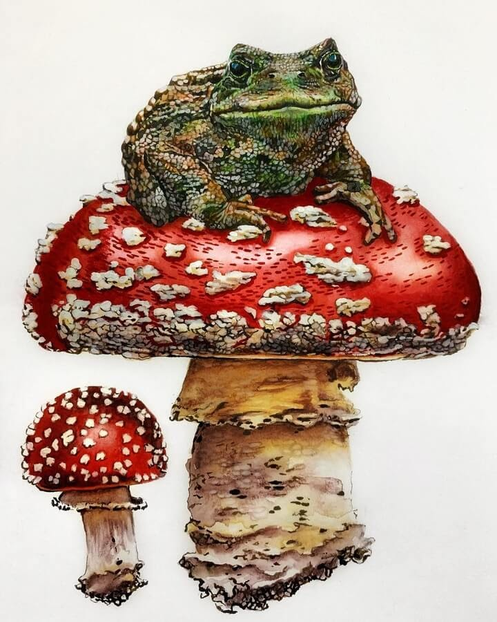 03-The-toad-on-mushroom-Anna-www-designstack-co