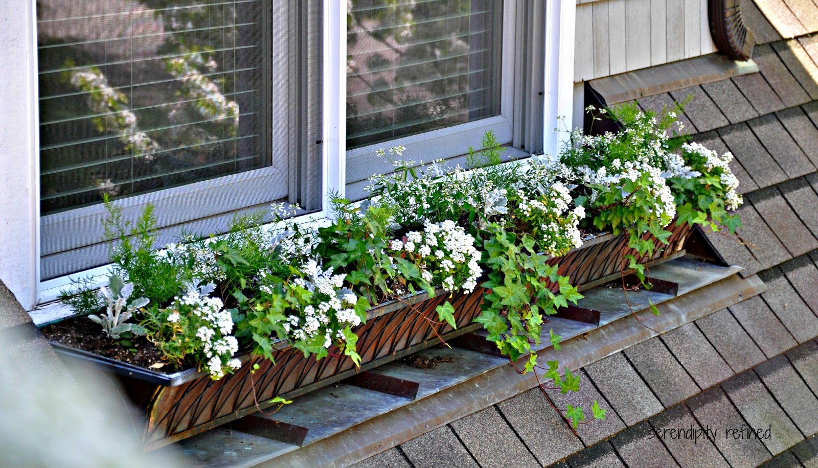 Purple White Flowers For Planters Gardening Flower And Vegetables