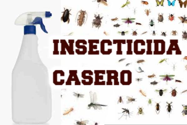 Insecticida casero ecológico