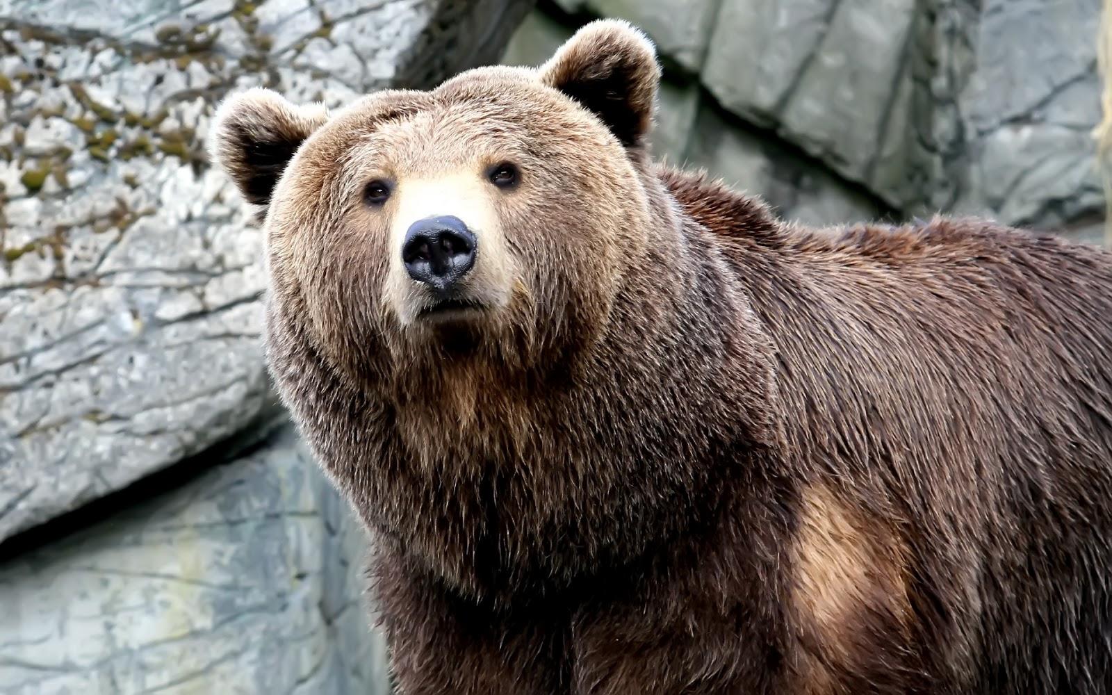 bears - photo #3