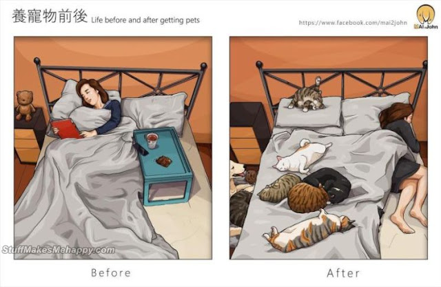 Taiwanese Artist Humorously Illustrates Life With And Without Pets