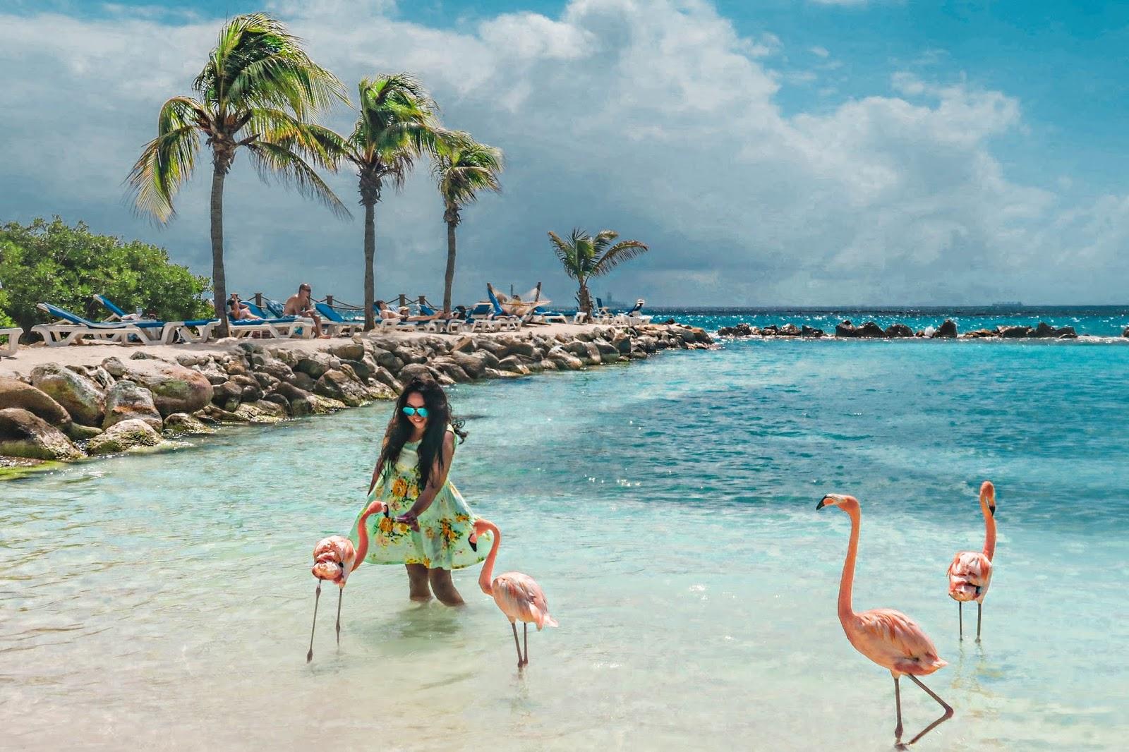 Renaissance Island Aruba Flamingos