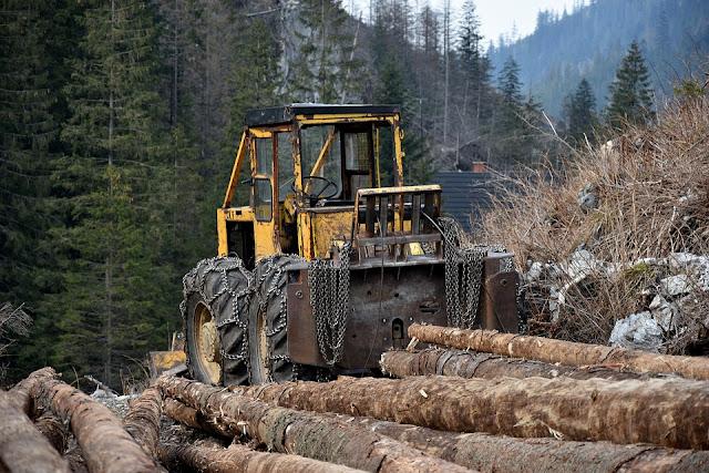 abbattimento alberi-ruspa-normativa