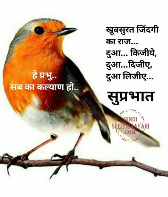 suprabhat images with birds