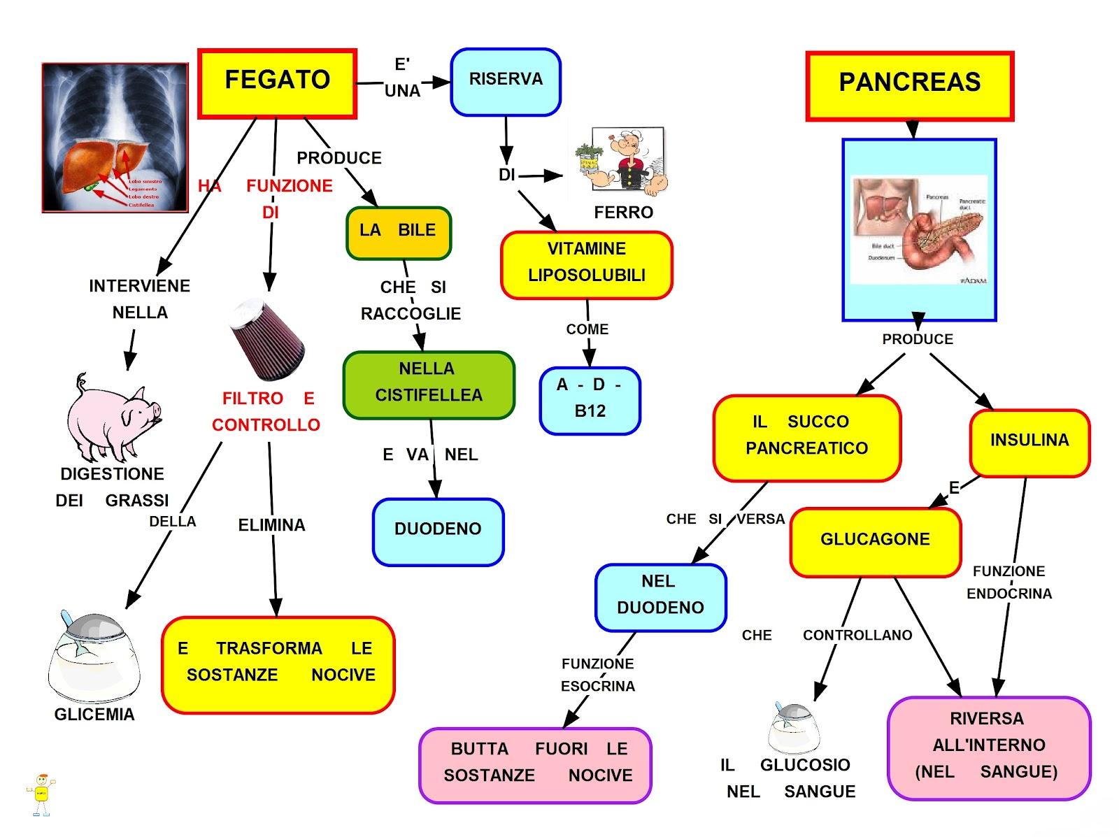 Disintossicare il pancreas con questi 8 alimenti è ...