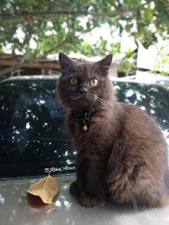 Penyakit-flutd-kucing
