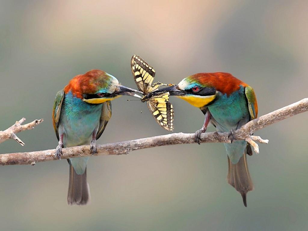 SUN SHINES: colourful birds wallpaper