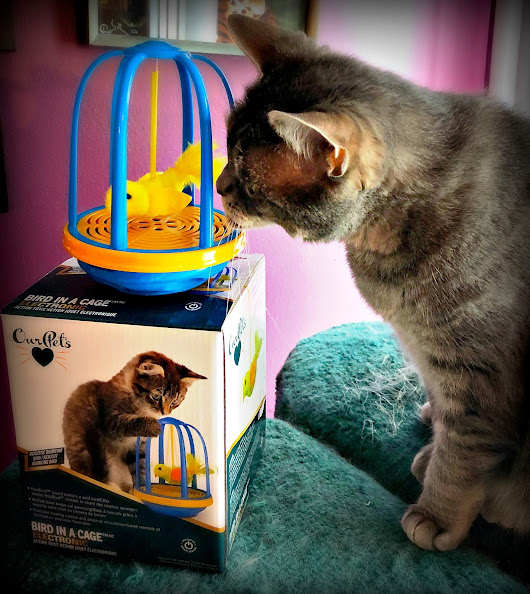 """It's a Bird!!"" Wait! It's a Bird in a Cage Electronic Action Cat Toy from OurPets®"