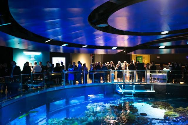 Best Aquariums in the USA: New England Aquariums