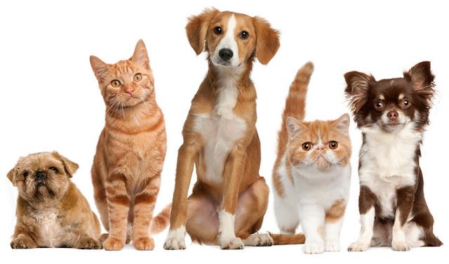 MPE/AL faz recomendação à prefeitura de Pão de Açúcar para controle populacional de cães e gatos