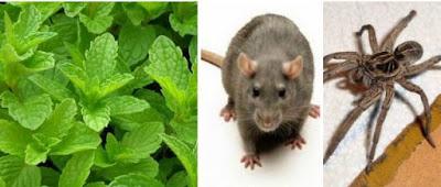 deshacerse de insectos, ratas, arañas
