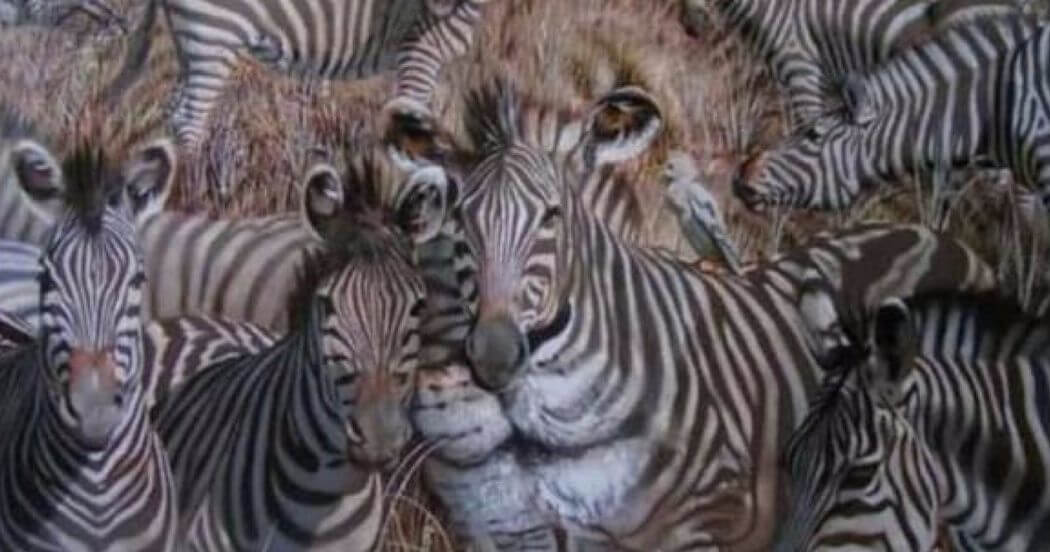 The First Animal You Saw In The Picture Unveils A Hidden Trait Of Your Personality