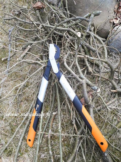 riippahernepuu leikkaus fiskars raivaussaksilla