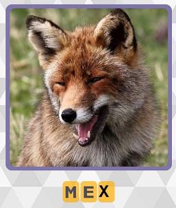 мех лисы на 5 уровне в игре 600 слов