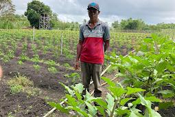 Kelompok Tani Dalam Lese Siap Suplai Sayuran Kebutuhan MTQ Maluku di Tanimbar