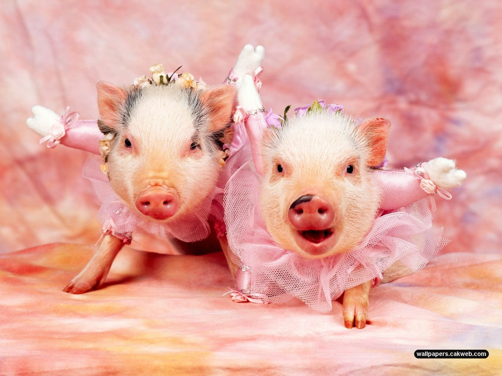Cute Pig Wallpaper Backgrounds: Animal Pictures Wallpapers For Wall