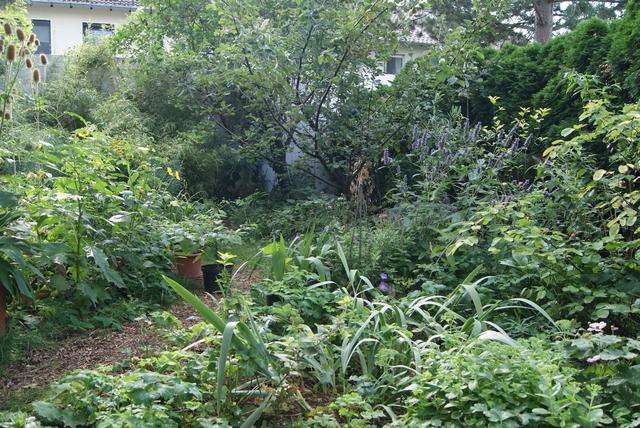 Blick in den überwiegend grünen Augustgarten