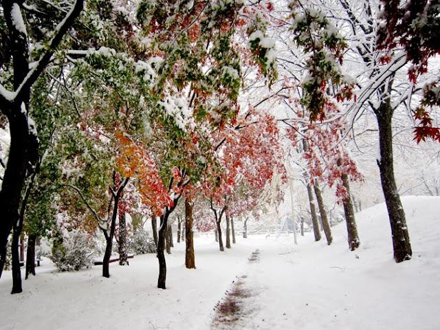 紅葉の雪景色
