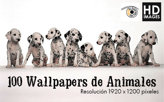 Descargar 100 Wallpapers de Animales en Formato HD