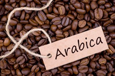 Cà Phê Arabia Mang Thương Hiệu Buôn Ma Thuột