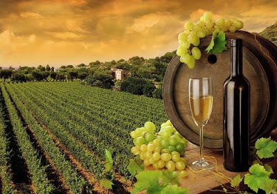 Israel é considerado por muitos o berço da produção de vinhos