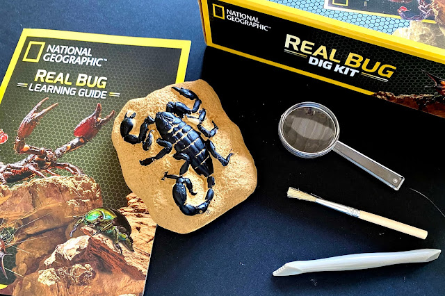 The contents of the national geographic real bug dig kit before review