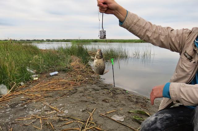 первый карпик пойманный на озере Яу-Балык