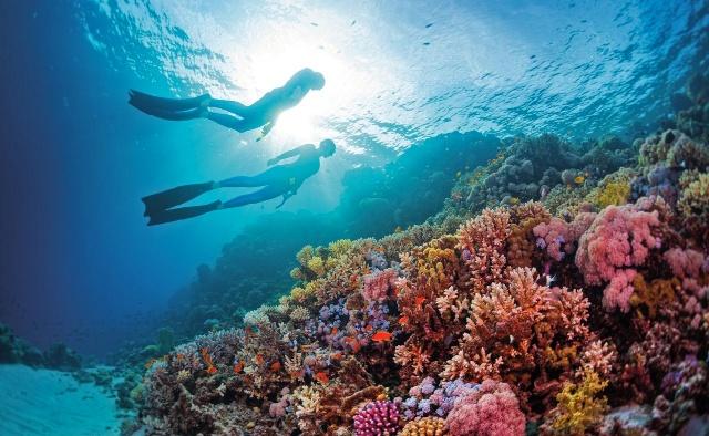 marsa-alam-snorkelink-poracci-in-viaggio