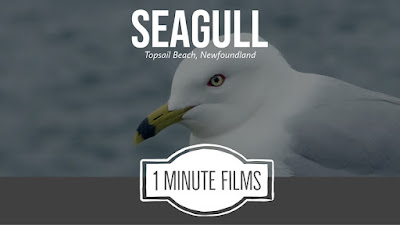 Seagull Video