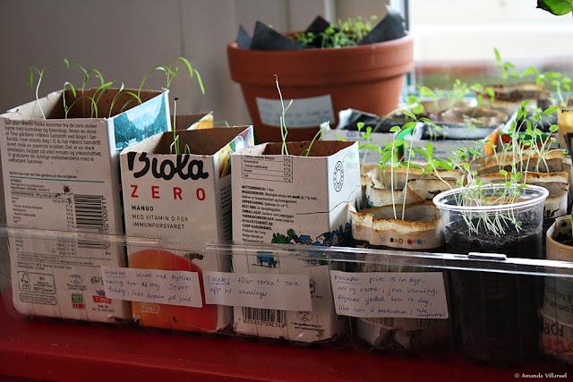 Indoor vegetable and herb garden