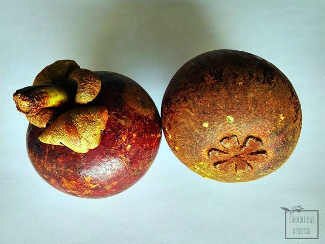 Mangostan właściwy (Garcynia mangostana) - tropikalny owoc, opis, smak, wygląd, zdjęcia, nasiona, siew.
