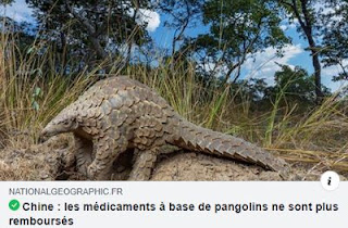 Médicaments à base de pangolin