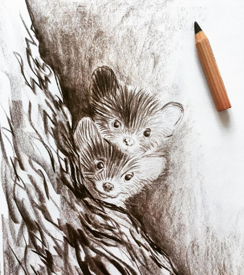 05-Curious-ferrets-Farbe-Und-Fabeln-www-designstack-co