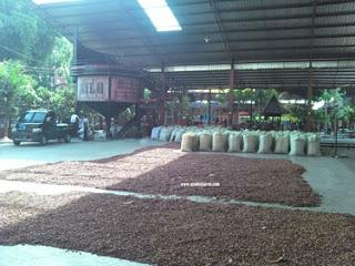 Pengolahan Coklat Di Kampung Coklat, Blitar