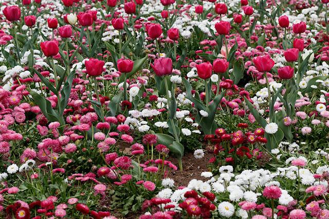 Spring Blossom 9
